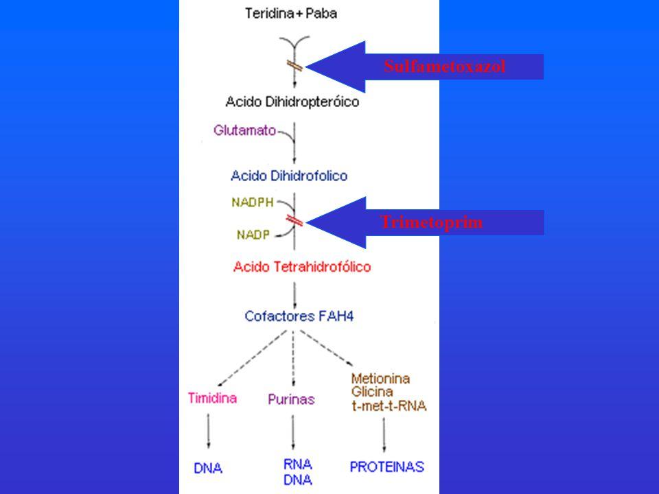 Sulfametoxazol Trimetoprim