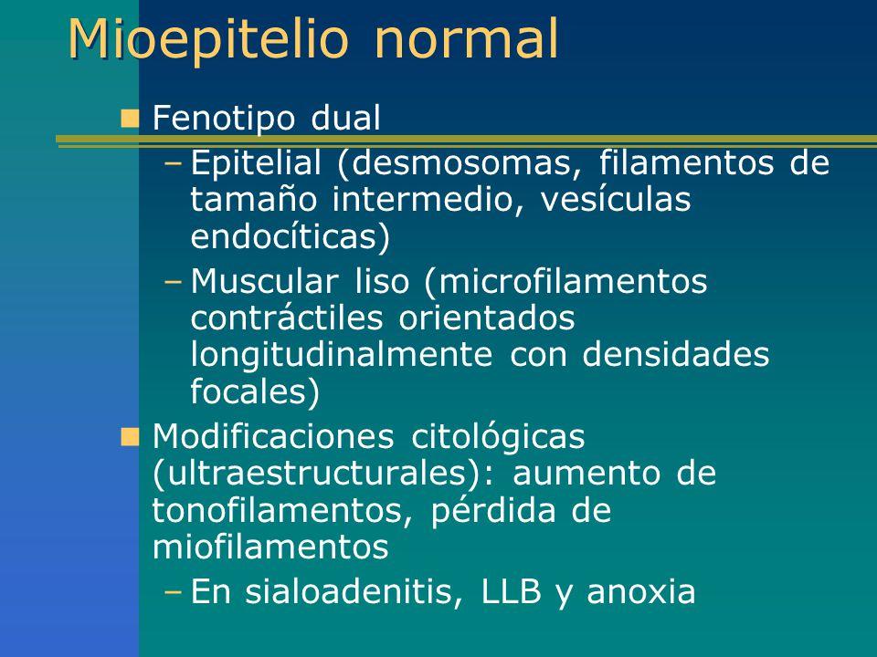 Mioepitelio normal Fenotipo dual