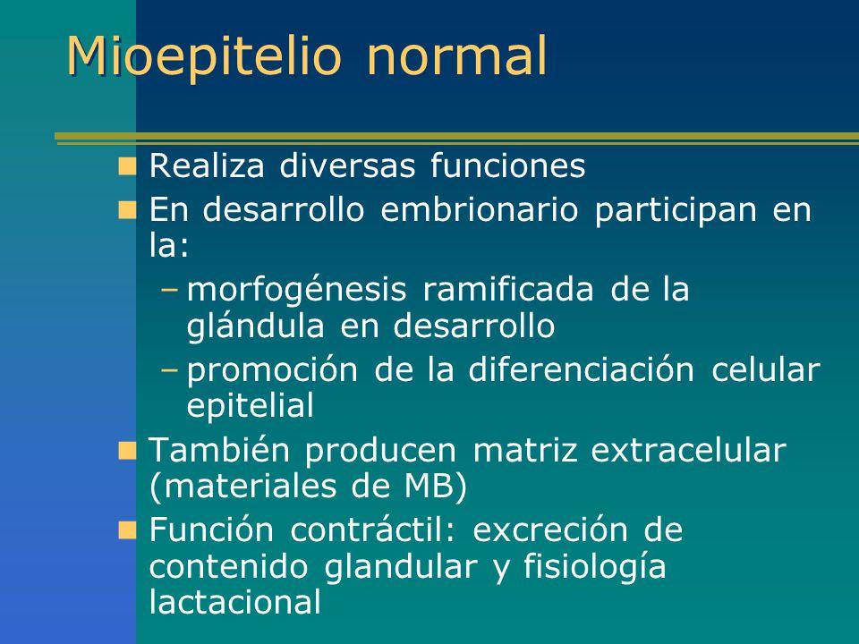 Mioepitelio normal Realiza diversas funciones