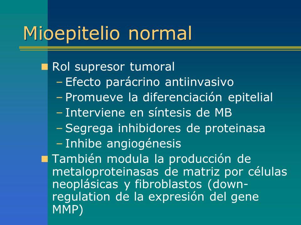 Mioepitelio normal Rol supresor tumoral Efecto parácrino antiinvasivo