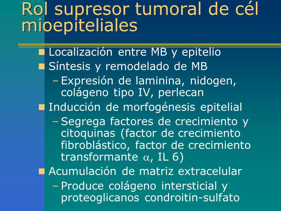 Rol supresor tumoral de cél mioepiteliales