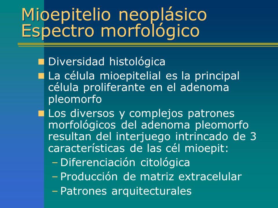 Mioepitelio neoplásico Espectro morfológico