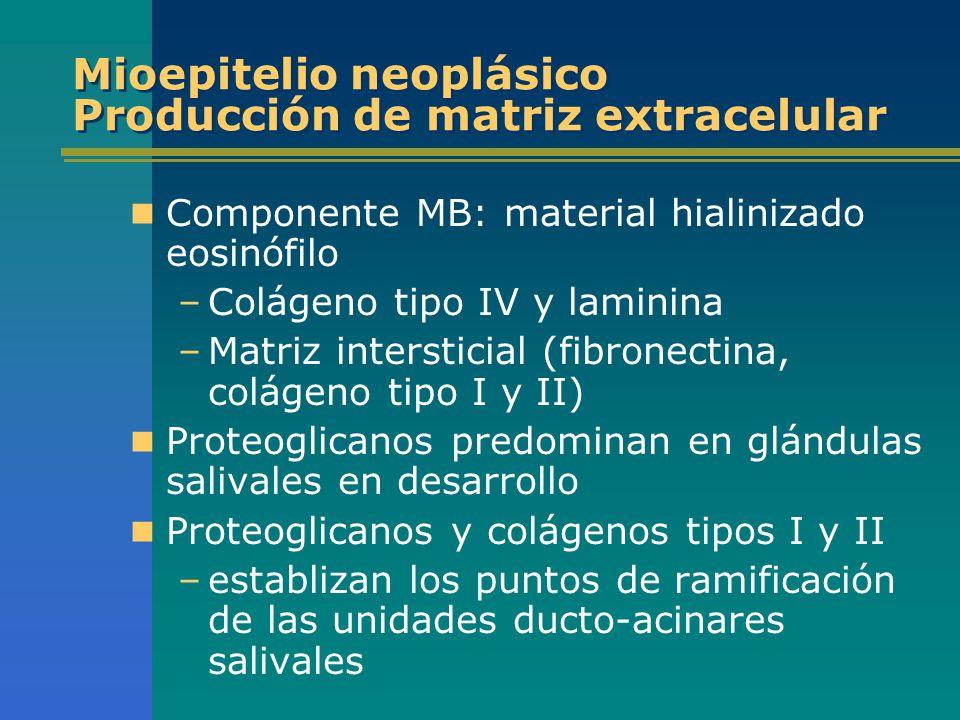 Mioepitelio neoplásico Producción de matriz extracelular
