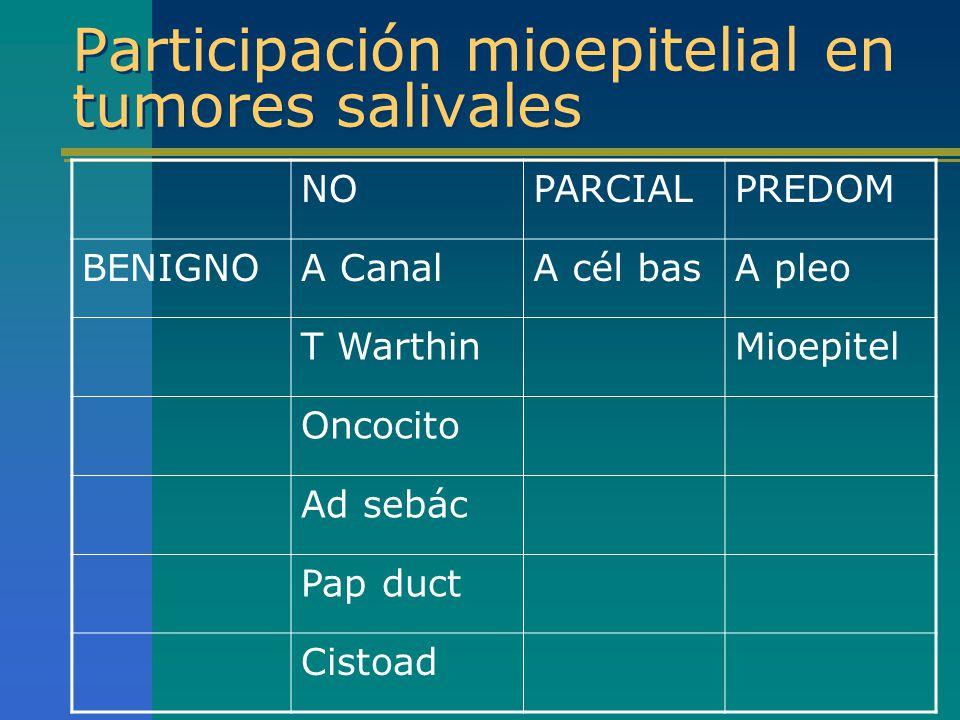 Participación mioepitelial en tumores salivales