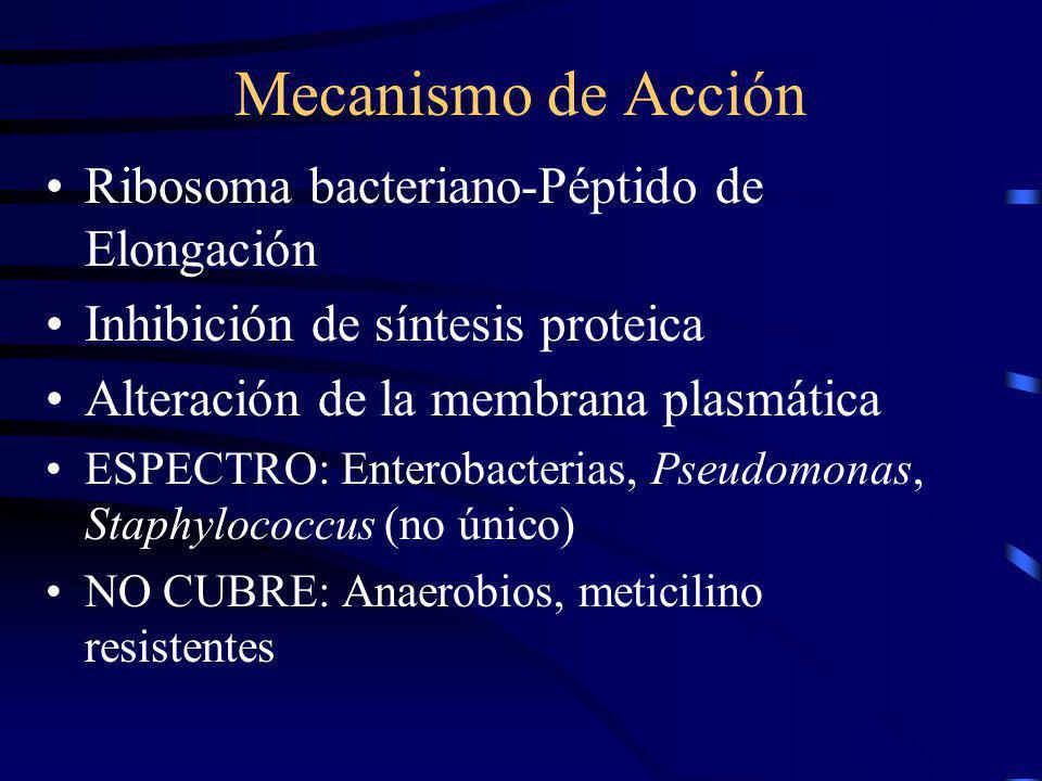 Mecanismo de Acción Ribosoma bacteriano-Péptido de Elongación