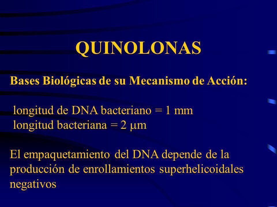 QUINOLONAS Bases Biológicas de su Mecanismo de Acción: