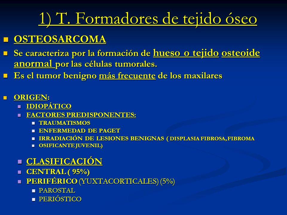1) T. Formadores de tejido óseo