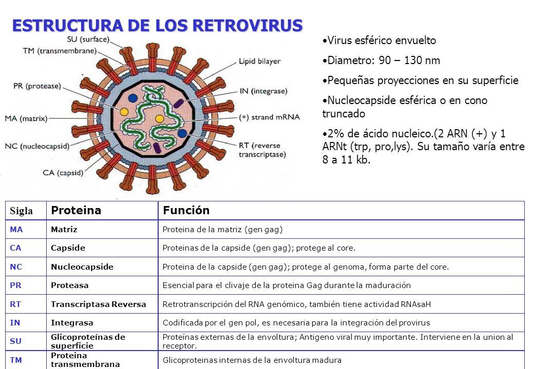 ESTRUCTURA DE LOS RETROVIRUS