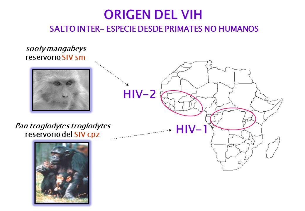 SALTO INTER- ESPECIE DESDE PRIMATES NO HUMANOS