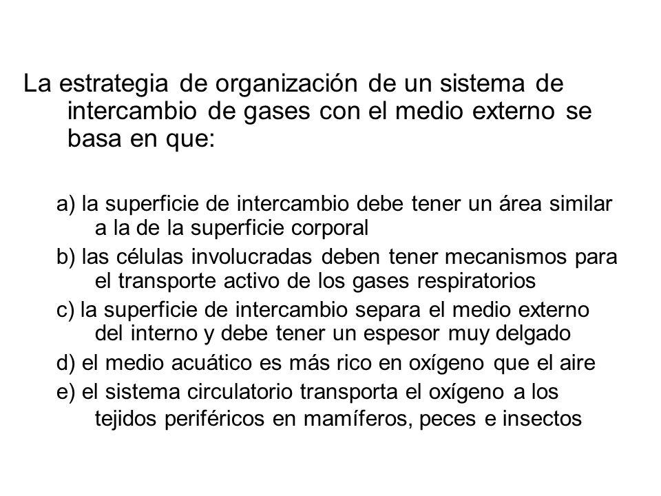 La estrategia de organización de un sistema de intercambio de gases con el medio externo se basa en que: