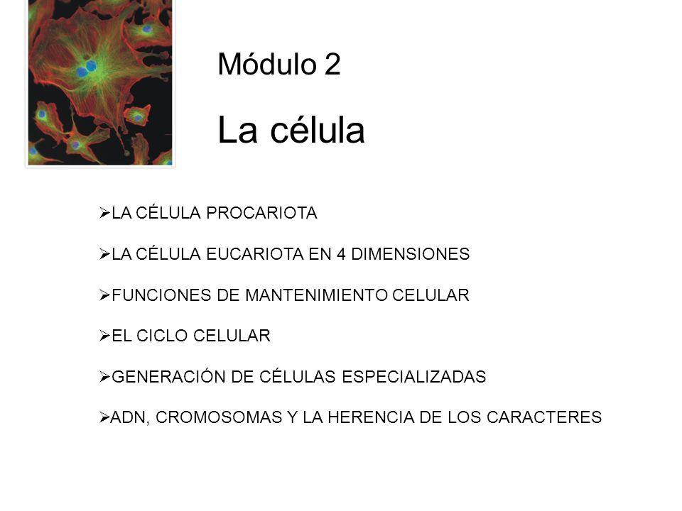 La célula Módulo 2 LA CÉLULA PROCARIOTA