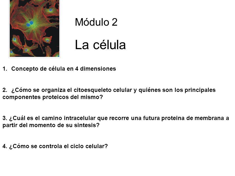 La célula Módulo 2 Concepto de célula en 4 dimensiones