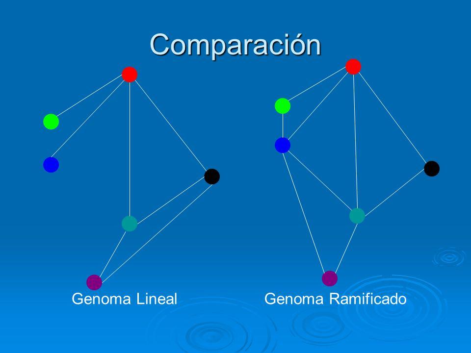 Comparación Genoma Lineal Genoma Ramificado