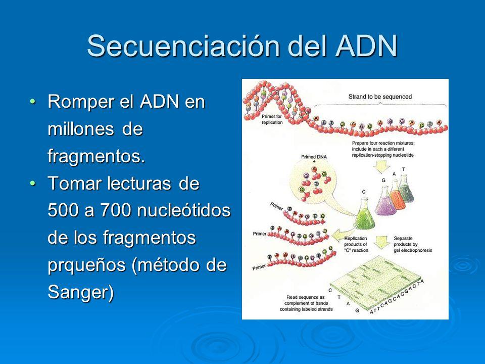 Secuenciación del ADN Romper el ADN en millones de fragmentos.