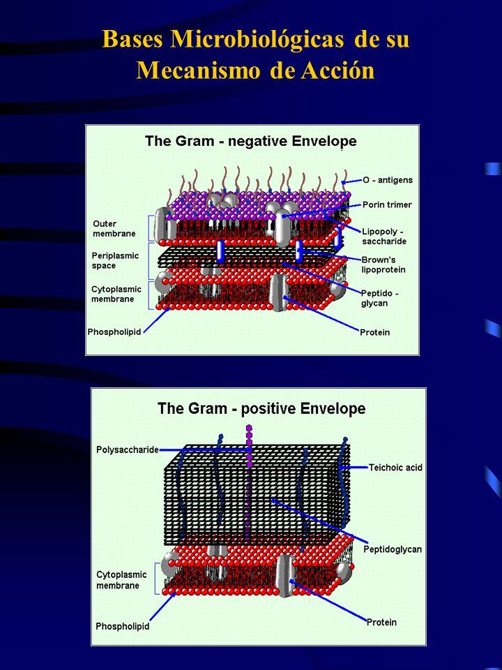 Bases Microbiológicas de su Mecanismo de Acción