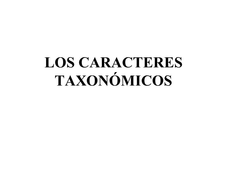 LOS CARACTERES TAXONÓMICOS