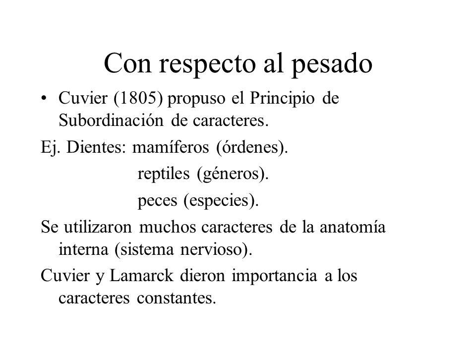 Con respecto al pesado Cuvier (1805) propuso el Principio de Subordinación de caracteres. Ej. Dientes: mamíferos (órdenes).