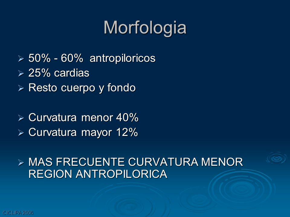Morfologia 50% - 60% antropiloricos 25% cardias Resto cuerpo y fondo