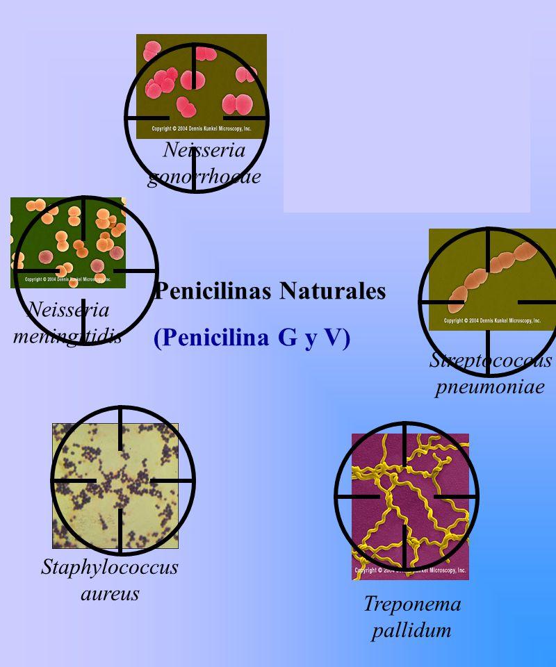 Penicilinas Naturales (Penicilina G y V)