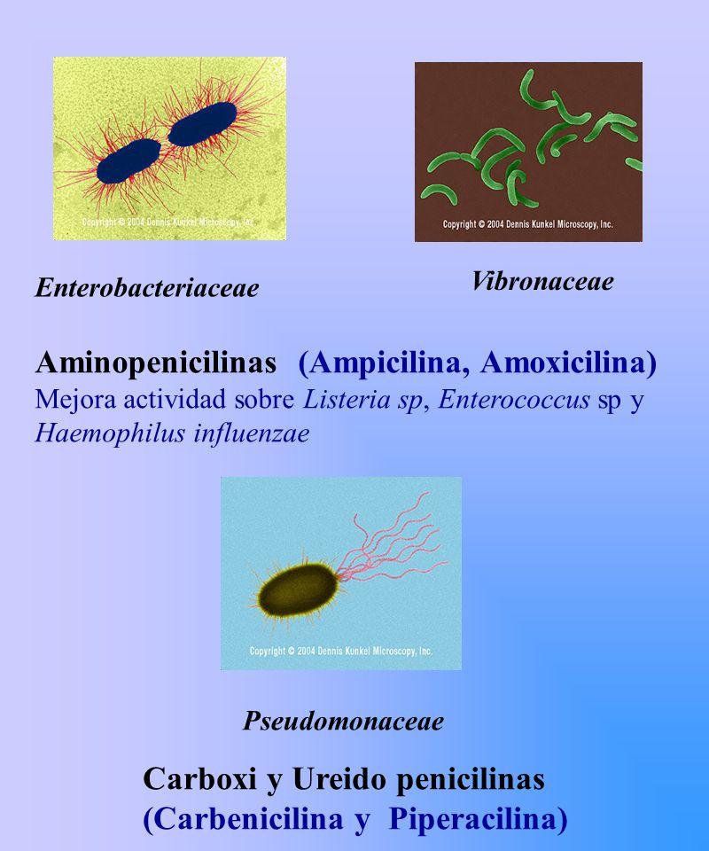Aminopenicilinas (Ampicilina, Amoxicilina)