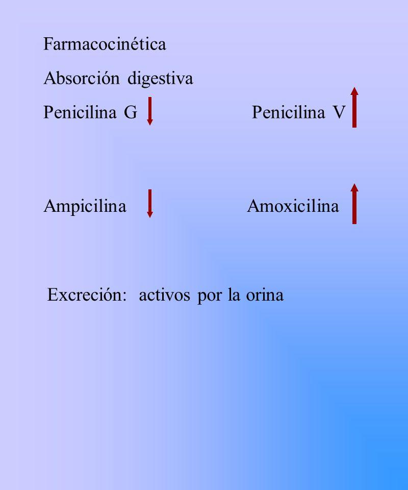 Farmacocinética Absorción digestiva. Penicilina G Penicilina V. Ampicilina Amoxicilina.