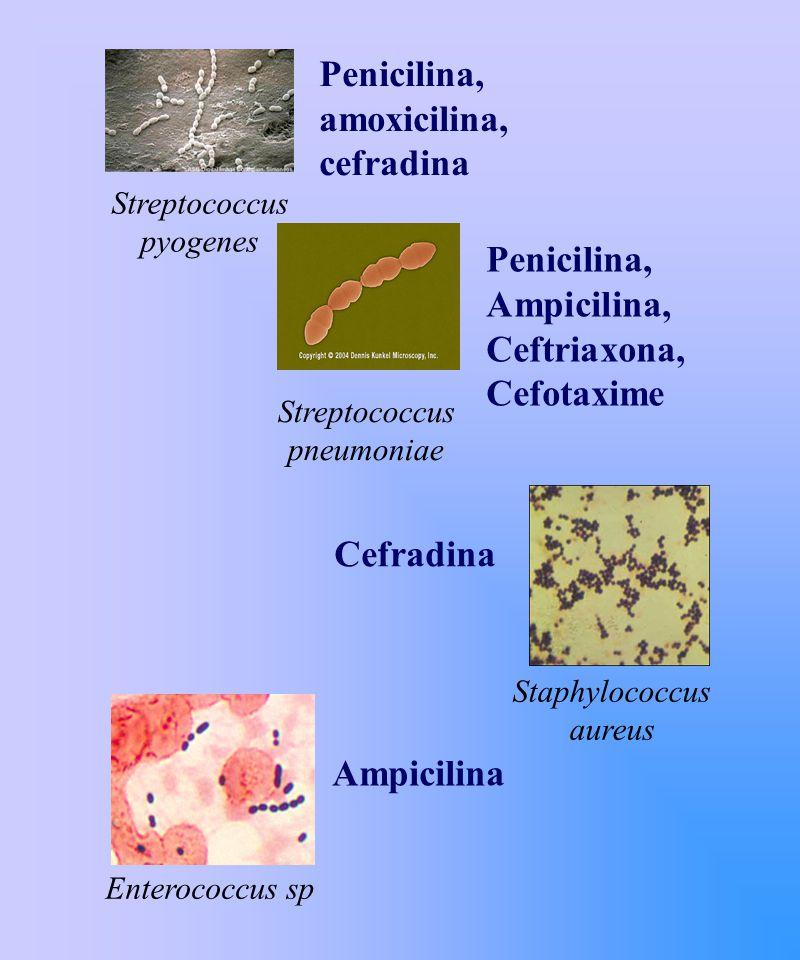 Penicilina, Ampicilina, Ceftriaxona, Cefotaxime