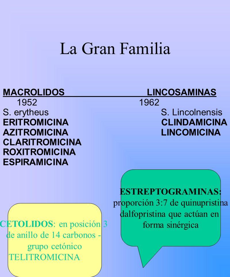 La Gran Familia MACROLIDOS LINCOSAMINAS 1952 1962