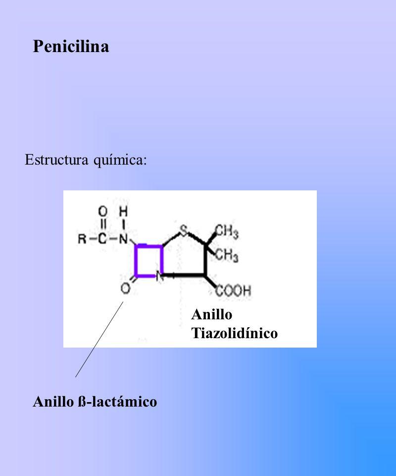 Penicilina Estructura química: Anillo ß-lactámico Anillo Tiazolidínico