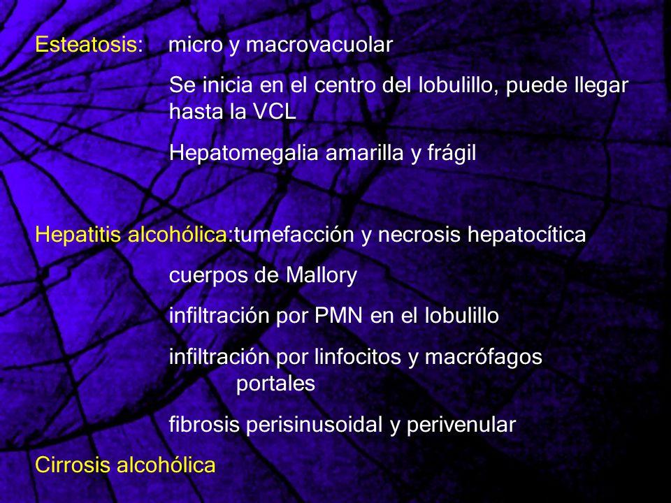 Esteatosis: micro y macrovacuolar