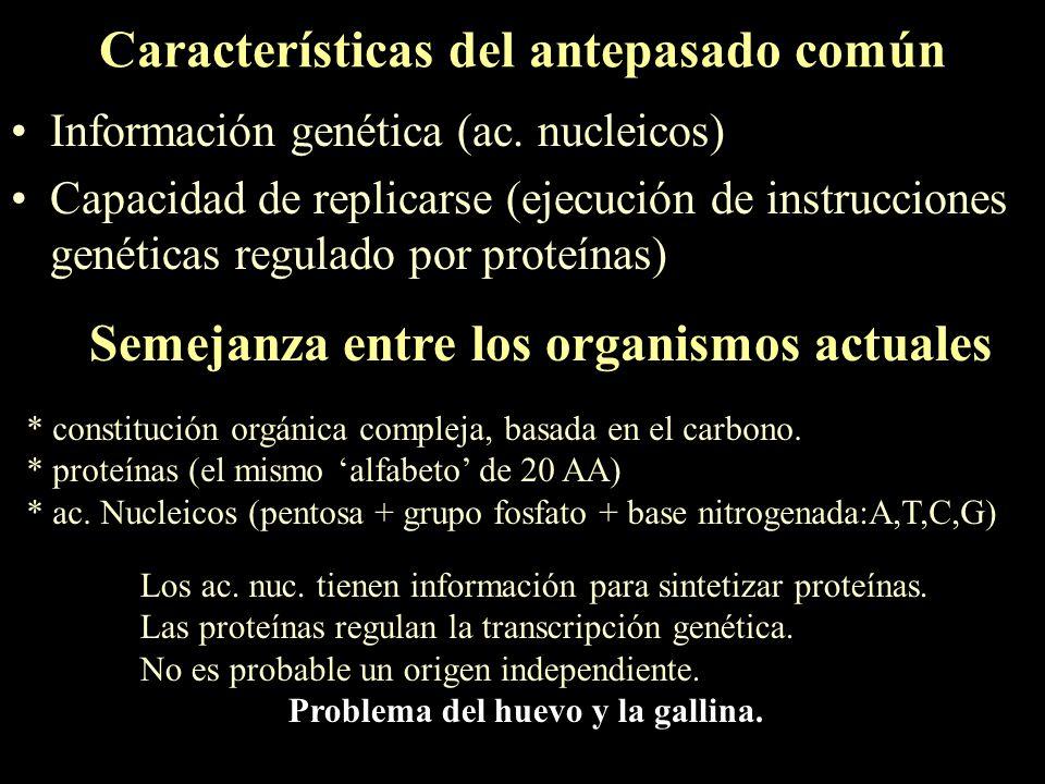 Características del antepasado común