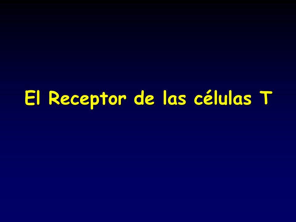 El Receptor de las células T