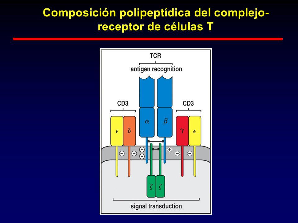 Composición polipeptídica del complejo-receptor de células T
