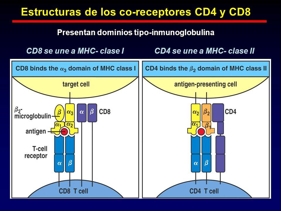 Estructuras de los co-receptores CD4 y CD8