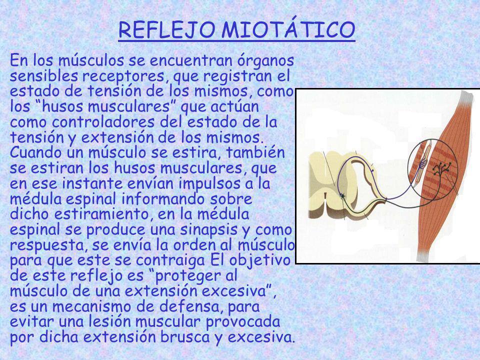 REFLEJO MIOTÁTICO