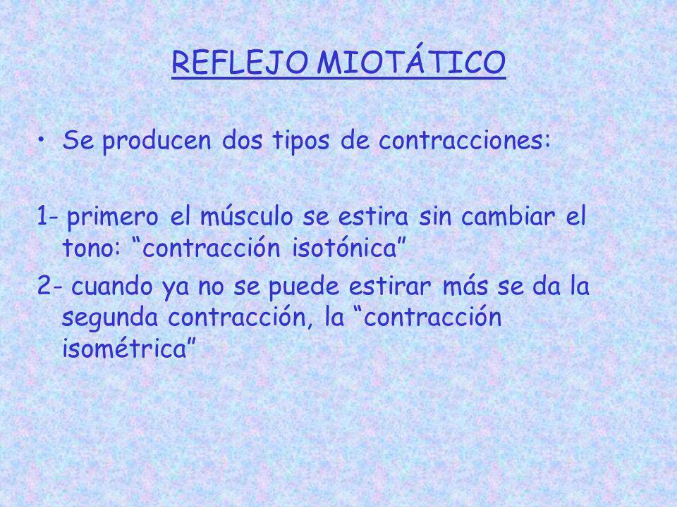 REFLEJO MIOTÁTICO Se producen dos tipos de contracciones: