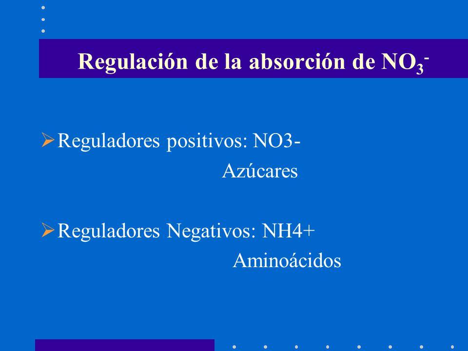 Regulación de la absorción de NO3-