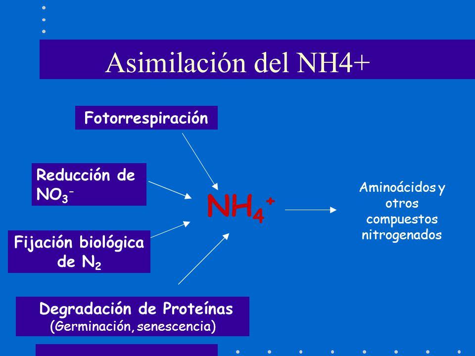 Fijación biológica de N2