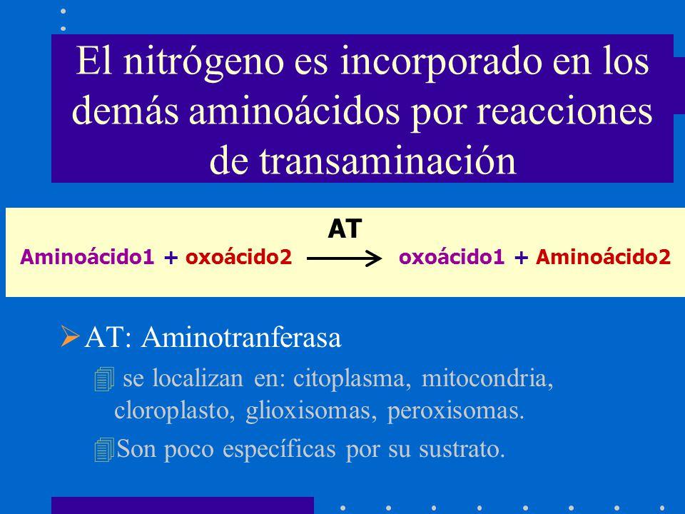 Aminoácido1 + oxoácido2 oxoácido1 + Aminoácido2