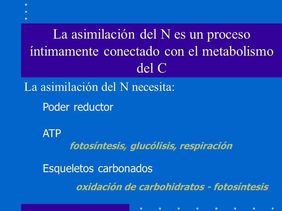fotosíntesis, glucólisis, respiración