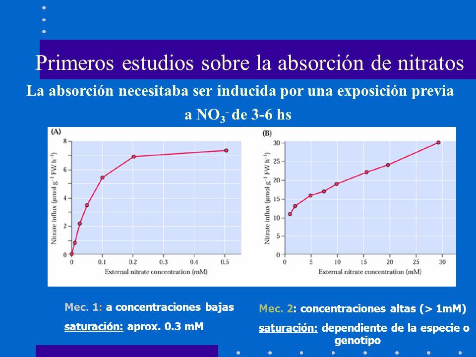 Primeros estudios sobre la absorción de nitratos