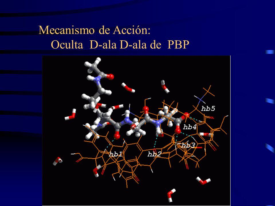 Mecanismo de Acción: Oculta D-ala D-ala de PBP
