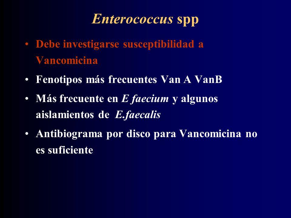 Enterococcus spp Debe investigarse susceptibilidad a Vancomicina