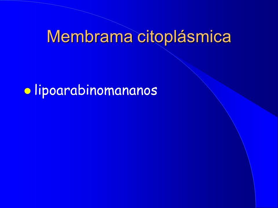 Membrama citoplásmica