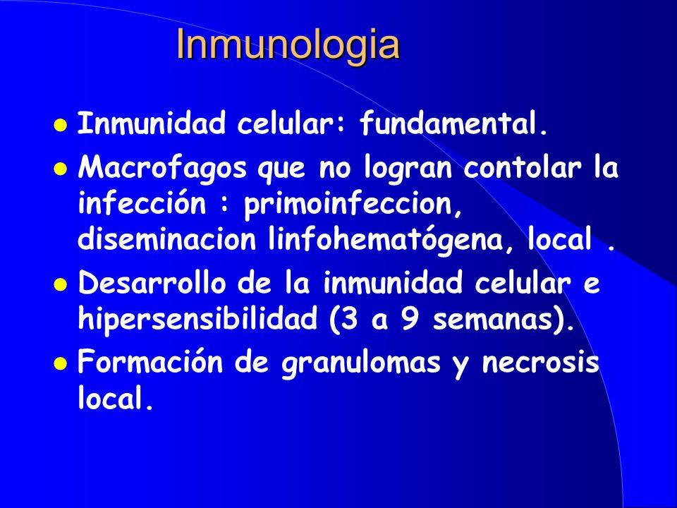 Inmunologia Inmunidad celular: fundamental.