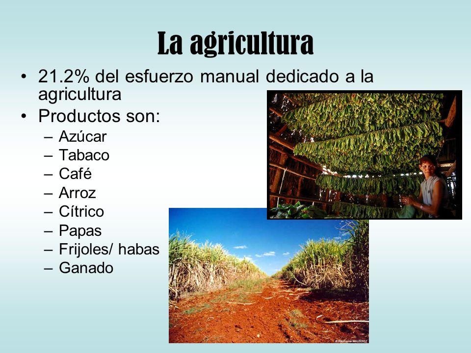 La agricultura 21.2% del esfuerzo manual dedicado a la agricultura