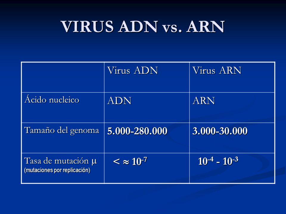 VIRUS ADN vs. ARN Virus ADN Virus ARN ADN ARN 5.000-280.000