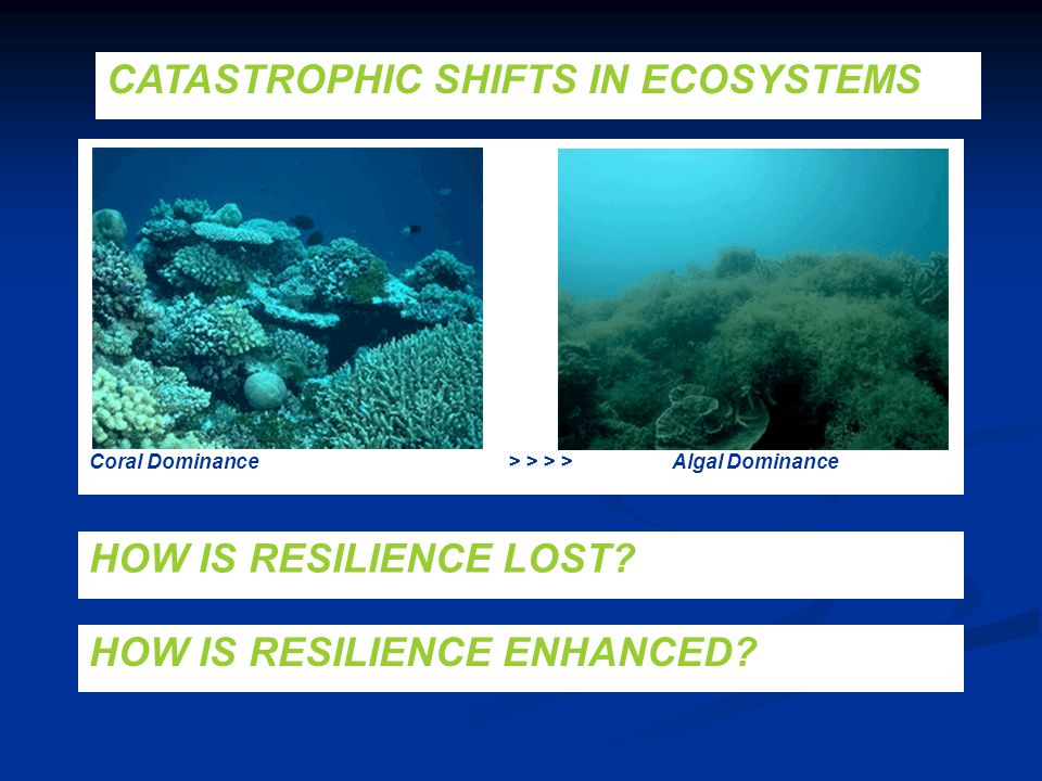 CATASTROPHIC SHIFTS IN ECOSYSTEMS