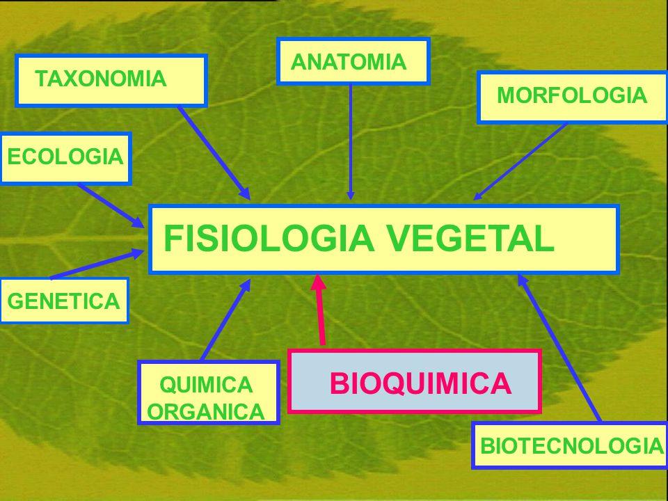 FISIOLOGIA VEGETAL BIOQUIMICA ANATOMIA TAXONOMIA MORFOLOGIA ECOLOGIA