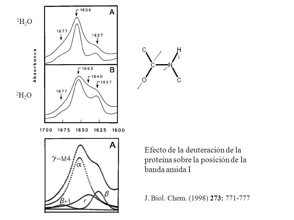 1H2O 2H2O. Efecto de la deuteración de la proteína sobre la posición de la banda amida I.