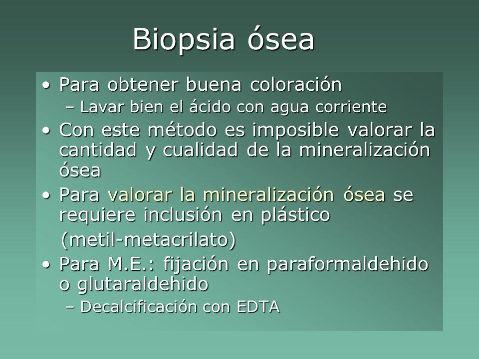 Biopsia ósea Para obtener buena coloración